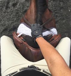 Best seat in the house ✌ #equestrian #horse #horses #equestrianperformance