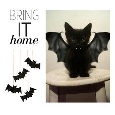 """""""Bring It Home: Hanging Bat Decorations"""" by polyvore-editorial ❤ liked on Polyvore featuring interior, interiors, interior design, home, home decor, interior decorating, Meri Meri and bringithome"""