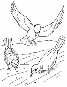 Sower Seed Parable Coloring Page for Kids