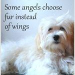 17 Best Dog Loss Quotes On Pinterest Dog Loss Pet Loss Quotes 729815