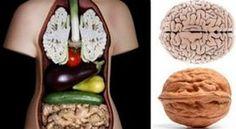 ДЕВЯТЬ ВИДОВ ПИЩИ ИСЦЕЛЯЮЩИХ ИМЕННО ТЕ ОРГАНЫ, НА КОТОРЫЕ ОНИ ПОХОЖИ. Удивительная связь с внешним видом пищи и его целебными для человека свойствами! Вы когда-нибудь замечали, что плод грецкого ореха напоминает мозг, а зерно фасоли напоминает почку? Это сходство показывает нам, что именно определенный плод может излечить в организме человека
