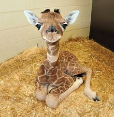 Some baby animals to lift your spirits.Some baby animals to lift your spirits.Some baby animals to lift your spirits.Some baby animals to lift your spirits. Cute Baby Animals, Funny Animals, Wild Animals, Nature Animals, Zoo Animals, Wildlife Nature, Funny Pets, Small Animals, Pics Of Cute Animals