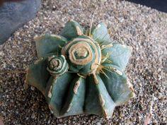 Ferocactus glausescens7