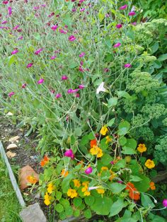 summer at my allotment in the middle of oslo. Allotment, Oslo, Middle, Plants, Summer, Summer Time, Plant, Planets
