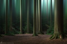Blurred-forest-small-watermark