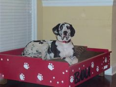 Pam and I made this dog bed for my Great Dane, Bama