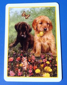 Wide Swap Playing Card TWO Puppy Dogs With Butterfly Mint Condition | eBay
