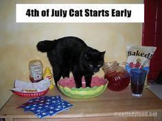 Party Cat can't wait.