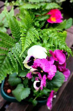 www.fleursaubalcon.com Abonnement Jardinière Fleurie pour votre balcon.  Composition très naturelle à base de pensées et fougères.