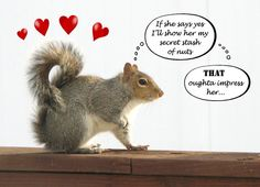 Squirrel greeting card - That oughta impress her Valentine card - Funny squirrel cards