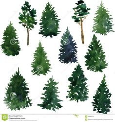 conifer garden design - Поиск в Google
