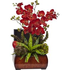 Nearly Natural Autumn Orchid & Succulent Arrangement With Chest ($290) ❤ liked on Polyvore featuring home, home decor, floral decor, green home decor, fall home decor, orchid arrangement, autumn home decor and orchid flower arrangement