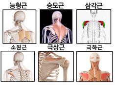 호주 물리치료사가 알려주는 체형교정법(라운드 숄더) Health Diet, Health Care, Shoulder Pain Exercises, Fitness Diet, Health Fitness, Heath Food, Anatomy, Yoga, Workout
