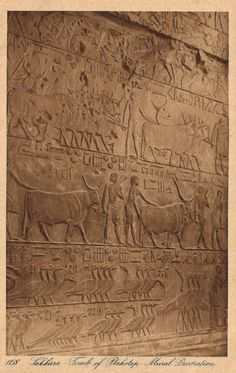 The Vintage Prophecy Postcards… 1910s Egyptian Ancient Tomb of Vizier Ptahhotep Mural Decoration at Saqqara by Lehnert & Landrock (RARE)
