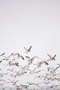 Seagulls Seashells at ShopRuche.com