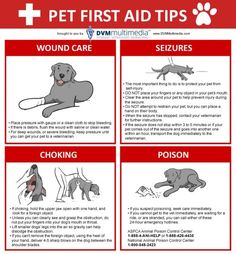 Every responsible pet owner should be ready to administer basic pet first aid at any moment: Pet First Aid Tips #Infographic