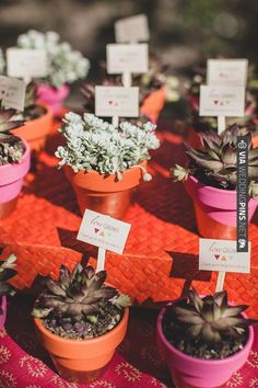 succulent wedding favors | CHECK OUT MORE IDEAS AT WEDDINGPINS.NET | #weddingfavors