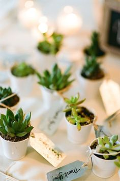potted succulent wedding favours