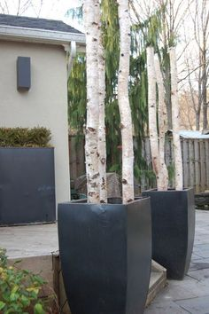 birch logs in planters Unique Outdoor Christmas Decor Decoration Branches, Birch Tree Decor, Branch Decor, Birch Logs, Birch Branches, Christmas Planters, Outdoor Christmas Decorations, Snowflake Decorations, Outdoor Planters