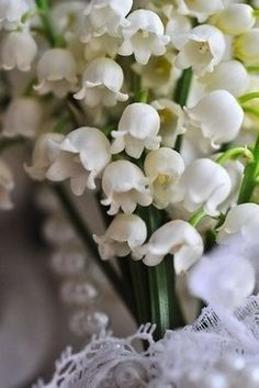 Lily of the Valley - reminds me of my grandmas front yard she had them growing under some high shrubs - the scent was capturing...and I can still remember the feel of the little bell flowers....just love them.