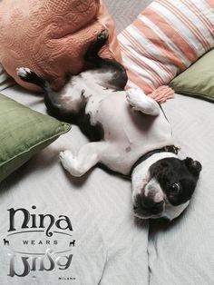 It's a Dog Life!