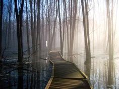 I love the idea of walking through the swamp. The Longest Journey, Southern Gothic, Fire Powers, Red Dead Redemption, Walkway, Mother Nature, Paths, Beautiful Places, Scenery