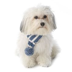 Frosty's Snowflake Dog Scarf - Winter Blue at BaxterBoo