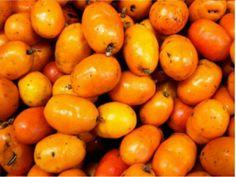 Siriguela, fruta típica do cerrado e da caatinga, brasileira, possui sabor adocicado.