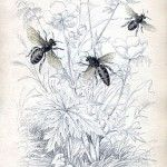 bee+botanical+vintage+Image+GraphicsFairy5sm
