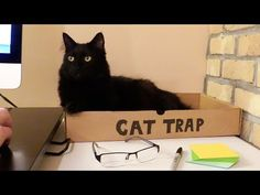5 Signs You Work With Cats In The Office