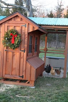 Don't forget a wreath for the coop this Christmas!