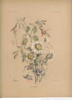 Album de l'École de dessin : journal des jeunes artistes et des amateurs -- 1854-11-25 -- periodiques