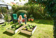 Plant og dyrk egen mat i en dyrkingskasse Outdoor Furniture Sets, Outdoor Decor, Plants, Home Decor, Blue Prints, Decoration Home, Room Decor, Plant, Home Interior Design