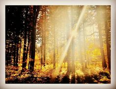 #Herbstwald #herbst #nature #wald #forest #sunset  #sonnenuntergang #prettypictures.at