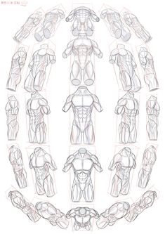 scrawl41 sketches, doodles, scrawl about torsos in perspective