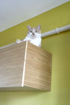 Pistache !    C'est le nom du chat Pistachio