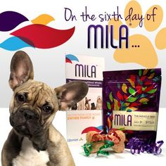 On the sixth day of Mila, nothing makes man's best friend happier than some Mila-filled doggy treats. Your puppy deserves a present, too!  http://www.mylifemax.net/recipes/mila-dog-treats/