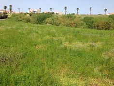 Gideon Estates – Bargain plot in Security Complex Plots For Sale, South Africa, The Good Place, Island, Places, Islands, Lugares
