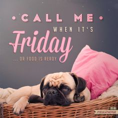Cute pug loves Friday and food Best Dog Breeds, Best Dogs, Pug Rescue, Pugs And Kisses, Pug Pictures, Cute Pugs, Tier Fotos, Pug Love, Animal Quotes