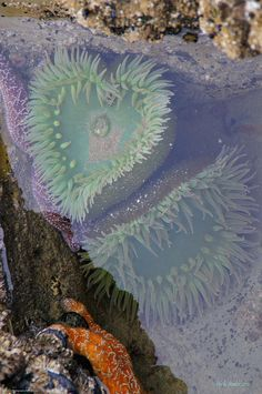 Heart Photograph - Heart Of The Tide Pool by Mick Anderson