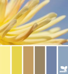 yellow brown blue