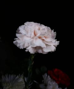 Amor eterno Plants, Photography, Instagram, Amor, Photograph, Photography Business, Flora, Photoshoot, Fotografie