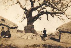 Jeolla-Namdo, Naju shaman tree (Dangsan-namu) 1930's