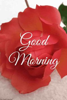 Are you looking for images for good morning motivation?Browse around this website for perfect good morning motivation ideas. These hilarious pictures will you laugh. Good Morning Beautiful Gif, Good Morning Rose Images, Romantic Good Morning Messages, Good Morning Roses, Good Morning Handsome, Good Morning Cards, Good Morning Texts, Good Morning World, Good Morning Picture