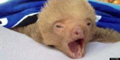 #animals #sleepy #sweet