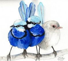 Splendid fairy wrens in ink and watercolour Watercolor Bird, Watercolor Animals, Watercolor Paintings, Watercolors, Illustrations, Illustration Art, Shading Drawing, Art Aquarelle, Feather Art