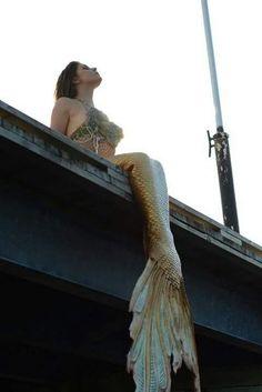 Halifax mermaid silicone mermaid tail by Merbella studios inc Siren Mermaid, Mermaid Kisses, Mermaid Tale, Tattoo Mermaid, Real Mermaids, Mermaids And Mermen, Fantasy Mermaids, Fantasy Creatures, Mythical Creatures