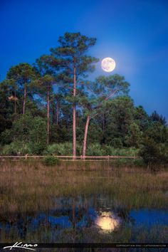 Beautiful Moon Rise Over Acreage Pines Natural Area in Loxahatchee Florida. Moon Pictures, Nature Pictures, Beautiful Pictures, Beautiful Moon, Beautiful World, Full Moon Night, Shoot The Moon, Moon Rise, Moon Art