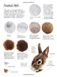 Today's Drawing Class: Drawing animals | Drawing Tutorial: How to Draw Animal Hair