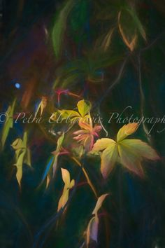 Vine... painterly photography Photography For Sale, Fine Art Photography, Vines, Plant Leaves, Colours, Autumn, Plants, Art Photography, Fall